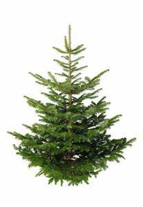 Das Preis-Leistungs-Verhältnis vom Künstlicher Weihnachtsbaum Testsieger im Test und Vergleich