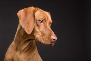 Beste Anbieter aus einem Hundehaftpflichtversicherung Testvergleich