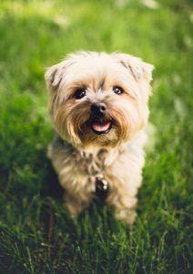 Einen guten Hundehaftpflichtversicherung Testsieger online im Angebot kaufen