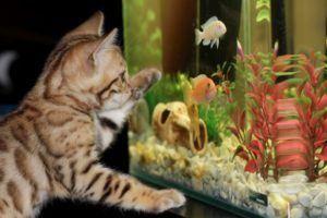 Die verschiedenen Anwendungsbereiche aus einem Aquarium Testvergleich