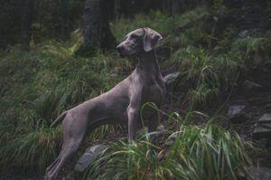 Welche Arten von Jagdhaftpflichtversicherung gibt es in einem Testvergleich?