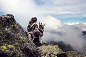 Die genaue Funktionsweise von einem Hundehaftpflichtversicherung im Test und Vergleich?