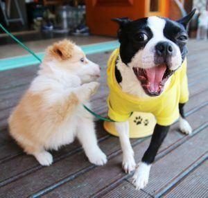 Beste Hersteller aus einem Hundehaftpflichtversicherung Testvergleich