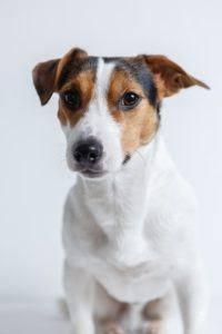 Die besten Ratgeber aus einem Hundehaftpflichtversicherung Test