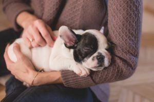 Nach diesen Testkriterien werden Hundehaftpflichtversicherung bei uns verglichen