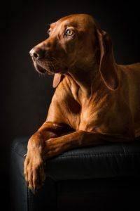 Vorteile aus einem Hundehaftpflichtversicherung Testvergleich