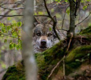 Vorteile aus einem Jagdhaftpflichtversicherung Testvergleich