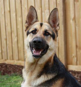 Was ist ein Hundehaftpflichtversicherung Test Vergleich