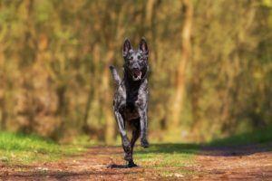 Wie funktioniert ein Hundehaftpflichtversicherung im Test und Vergleich?