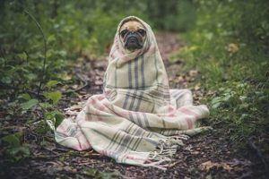 Eine freie Arztwahl aus einem Hundekrankenversicherung Test und Vergleich