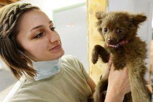 Fragen aus einem Hundekrankenversicherung Test und Vergleich