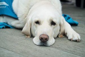 Gesundheitsfragen aus dem Hundekrankenversicherung Test und Vergleich