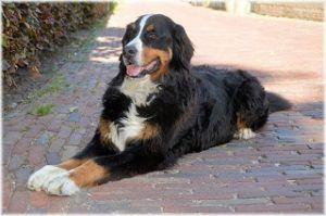 Wartezeit aus einem Hundekrankenversicherung Test und Vergleich