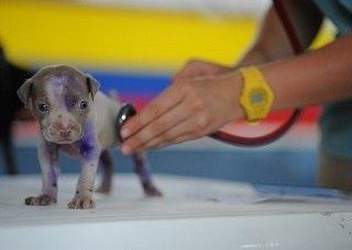 Was iste ein Hundekrankenversicherung Test und Vergleich