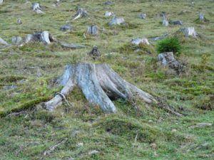 Gutes Angebot für Baumstumpf entfernen