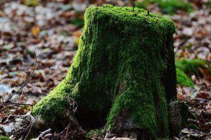 Günstiger Handwerker für Baumstumpf entfernen