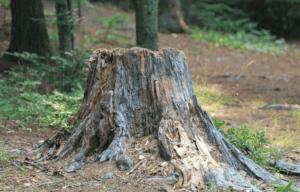 Vergleich: Baumstumpf entfernen Kosten