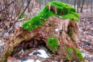 Guter Kostenvoranschlag für Baumstumpf entfernen