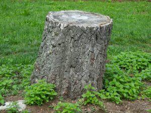 Guter Preis für Baumstumpf entfernen