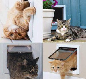 Gutes Angebot für Katzenklappe einbauen