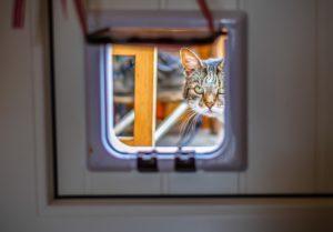 Günstiger Handwerker für Katzenklappe einbauen
