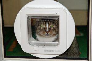 Guter Kostenvoranschlag für einen Katzenklappe Einbau