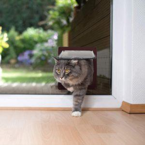 Guter Preis für Katzenklappe einbauen