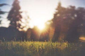 Guter Kostenvoranschlag für Rasen neu anlegen