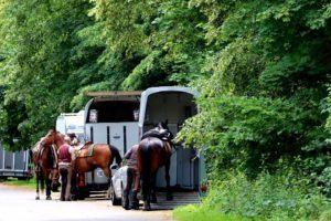 Gutes Angebot für Pferdetransport