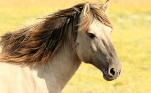 Vergleich: Pferdetransport Kosten