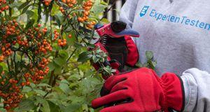 Die verschiedenen Anwendungsbereiche aus einem Gartenscheren Testvergleich